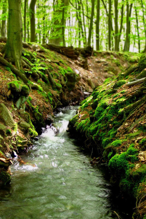 Résultat d'images pour ruisseau en foret
