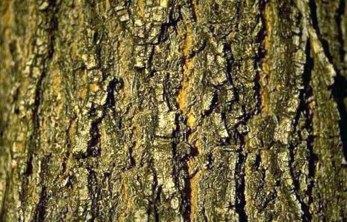 Mon épitaphe Tronc-d-arbre-gros-plan_imagelarge